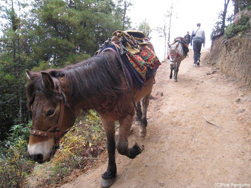 タクツァン僧院への道