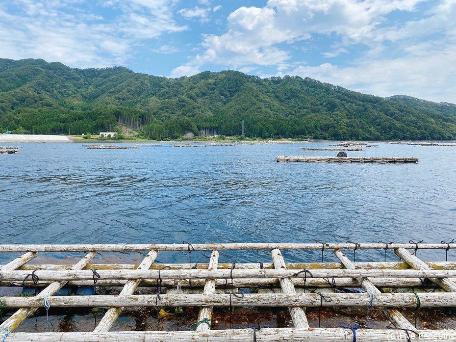 美しい三陸山田湾には牡蠣棚がたくさんある