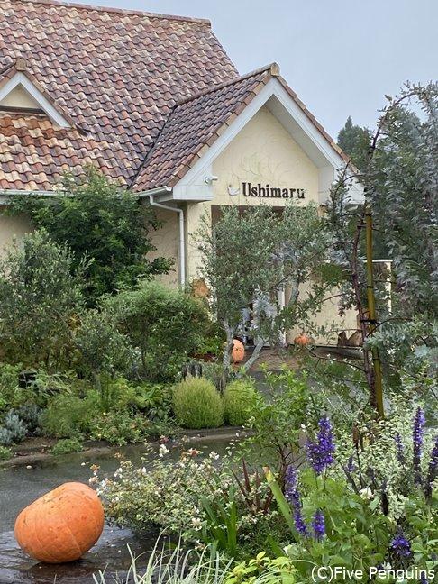 庭にはハーブなども植わっている住宅街にある洋風の建物、ハロウィンに向けて?大きなかぼちゃ