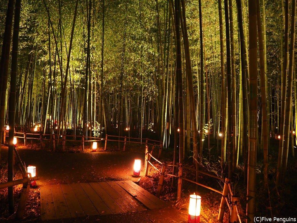 夜になるとまた違った趣を感じさせる嵐山の竹林。かぐや姫が出てきそう。